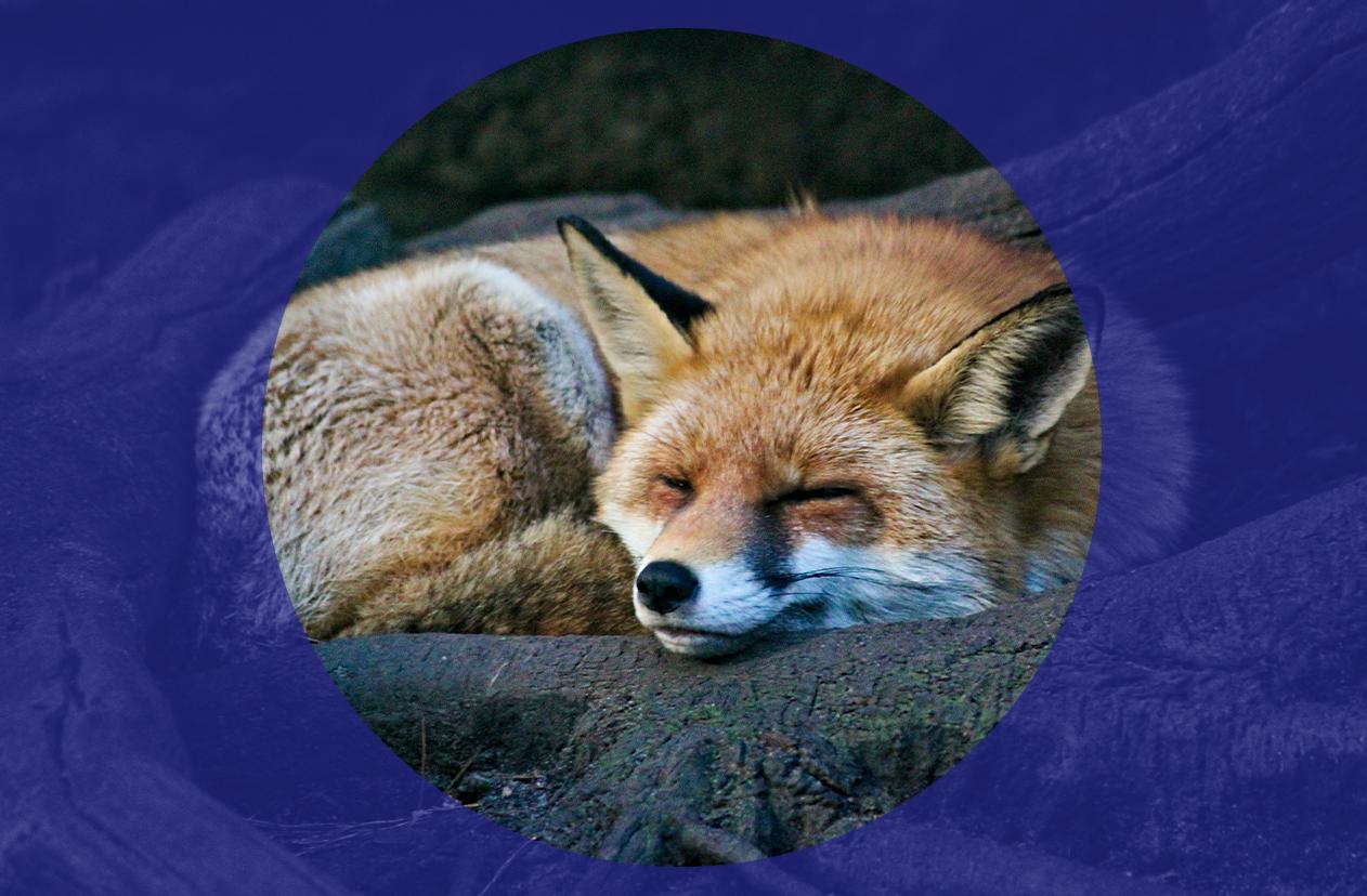 Sean Bell: Class war or not, fox-hunting must end
